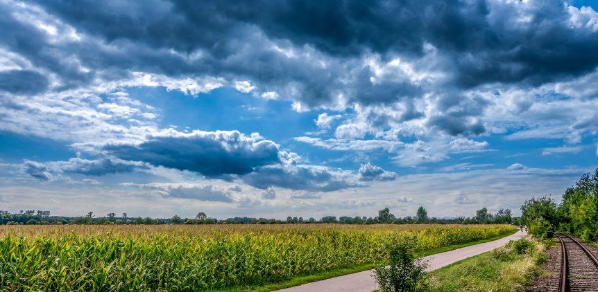 cornfield-480094_1920